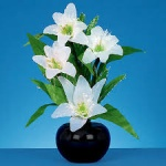 50cm F-O White Lilies w-White With Timer