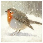 Simon Elvin Robin Red Breast