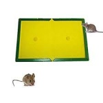 Rat glue trap (0350)