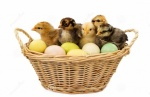 Easter Baby Chicks In Basket